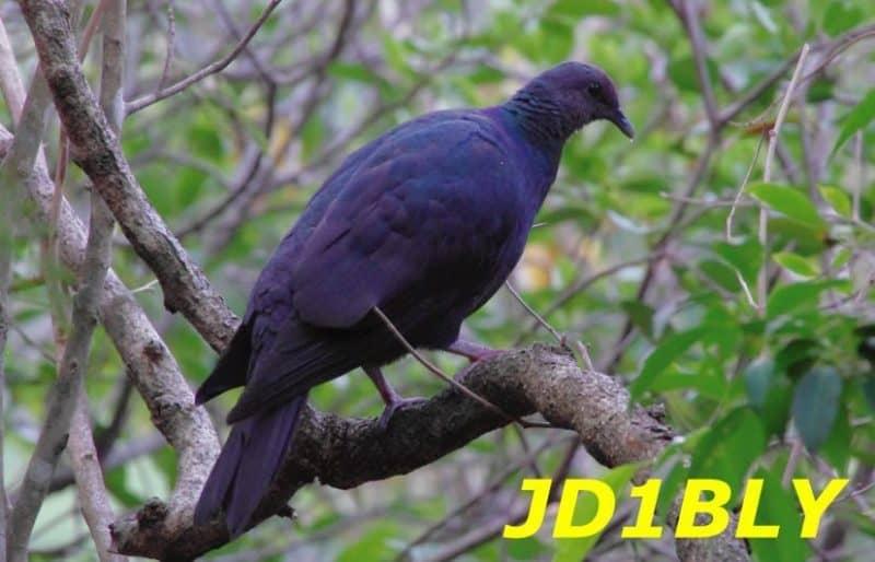 JD1BLY Chichijima Island 2021